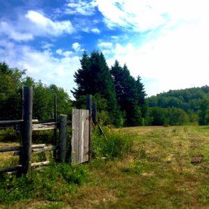 q farms scenery