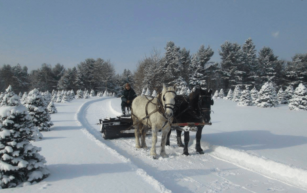 mockingbird hill farm sleigh ride